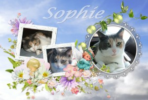 2013-10-14-sophie-300x203