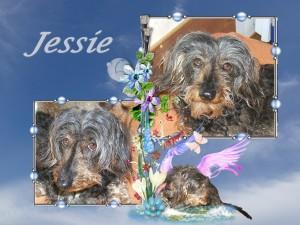 2013-10-16-jessie-300x225